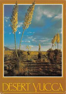 - Desert Yucca