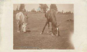 RP: BRACEBRIDGE , Ontario ,1900-10s ; Horses