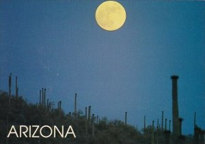 Arizona Tempe Moonlit Desert
