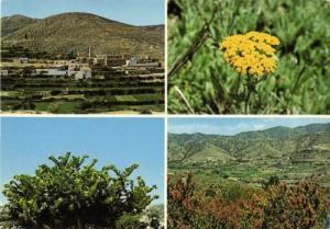 saudi arabia, ASIR, Multiview, Flower, Plants (1970s)