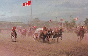 Canada Chuckwagon Races Calgary Stampede Alberta