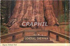 Modern Postcard Sequoia National Park General Sherman Tree