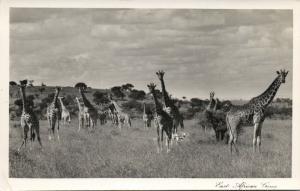 kenya, East African Game, Giraffe (1950s) Skulina Pegas RPPC