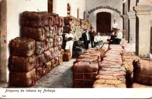 Cuba Havana Scene In Tobacco Warehousele