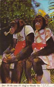 Dressed Monkeys Sitting On Bench Smoking Pipe Monke Jungle Florida 1973