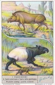 Liebig S1572 Large Mammals No 6 Tapir