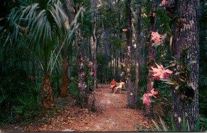 Florida Weeki Wachee Orchid Gardens