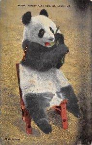 Bear Post Card Panada, Forest Park Zoo St Louis, MO, USA 1952