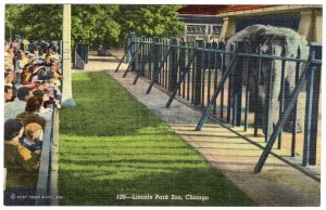 Chicago, Lincoln Park Zoo