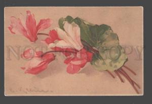 094818 CYCLAMEN Pink Flowers C. KLEIN old Meissner Buch 1514
