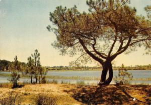 Portugal Leiria Lagoa de Ervideira, Etang d'Ervideira