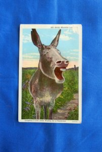 Rocky Mountain Canary Vintage Postcard, Laughing Donkey, Animal, Funny, Burro