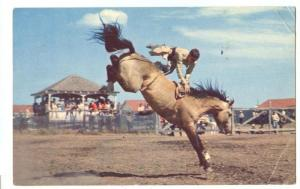 A Typical rodeo scene in the West, Terry Buckingham