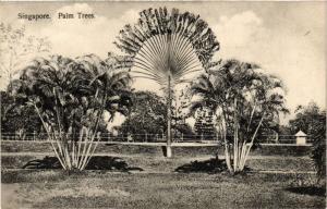 Singapore Postcard Palm Trees (a1411)