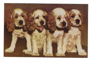 Dogs Boston Terrier Cocker Spaniels Bulldog 3 Mike Roberts Postcards