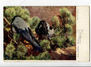 263048 RUSSIA HUNT Birds CROW Corneilles LILJEFORS Granberg PC