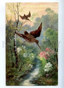 223179 HUNTING flying colorful WOODCOCK old postcard