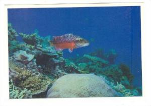A Silent World Of Fish And Coral, The Great Barrier Reef, Australia, 1950-1970s