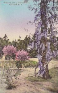 North Carolina Pinehurst Wisteria &  Judas Tree Albertype