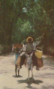 Man on donkey , Jamaica , 50-60s