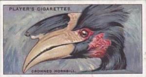 Player Cigarette Card Curious Beaks No 22 Crowned Hornbill