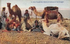 Palestine Group of Camels in The Desert Postcard