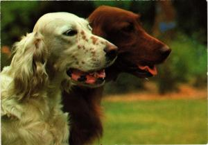 CPM English & Irish Setter CHIEN (717209)