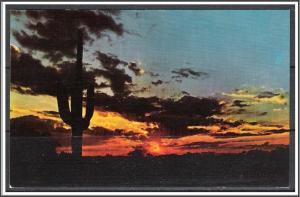 United States - Desert Sunset Saguaro Cactus
