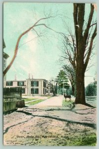 Northfield Massachusetts~Deer on Main Street under Bare Tree~1910 Postcard