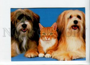 3117372 TERRIERS & CAT old PHOTO color PC