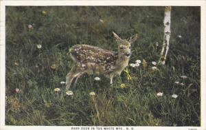 Baby Deer In The White Mountains Of New Hamshire 1930 Curteich