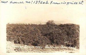 RPPC Orange Grove near Baldwin Park, CA San Gabriel Valley 1949 Vintage Postcard