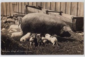 RPPC - Mama Hog & Piglets - Making Pigs of Themselves