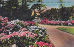 Rhododendros Golden Gate Park San Franicsco California
