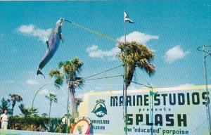 Jumping Porpoise Marine Studios Marineland Florida