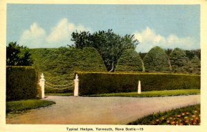 Canada - Nova Scotia, Yarmouth. Typical Hedges