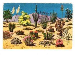 Cacti and Desert Flora of the Great Southwest, Used Arizona, 1976