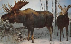 Canada Saskatchewan Museum of Natural History Wascana Park Regina Postcard
