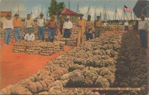Sponge Exchange, Tarpon Springs, Florida vintage postcard 1915-1930s