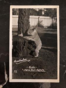Mint Australia Real Picture Postcard Koala climbing the tree Native Bear