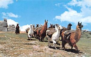 Peru Old Vintage Antique Post Card Caravan of Llamas Cuzco Writing on back