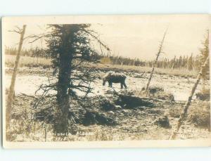 Pre-1930 rppc NICE VIEW Kenai Peninsula - Near Anchorage Alaska AK i9556
