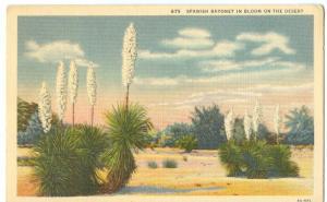 Spanish Bayonet in Bloom on the Desert unused linen Postcard