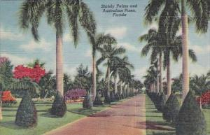Florida Stately Palms And Australian Pines Florida 1950 Curteiclh