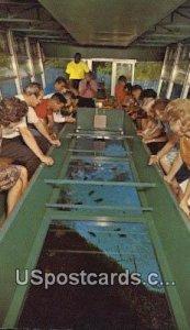 Glass Bottom Boats - Silver Springs, Florida FL Postcard