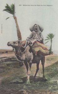 CAMEL ; Mehariste dans les Oasis du Sud Algerien , 00-10s