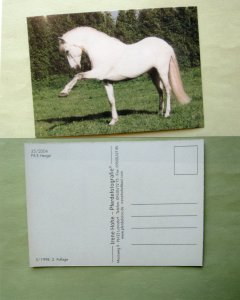 Beautiful White / Light Grey Prancing Horse Postcard Stallion Equine