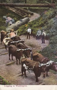 WASHINGTON, 1900-1910's; Logging In Washington