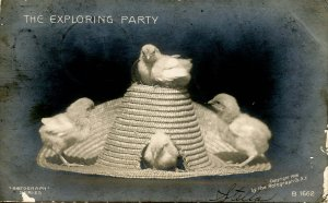 The Exploring Party - Baby Chicks on a Hat     *RPPC