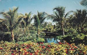 Bahamas Freeport-Lucaya Garden Of The Groves